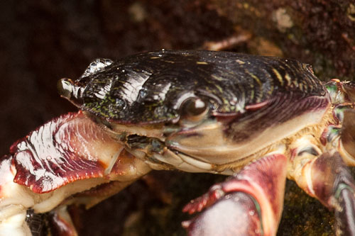 Close-up of crab showing back focus