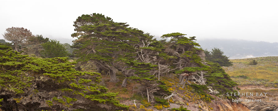Allan Memorial Grove at Point Lobos, California.