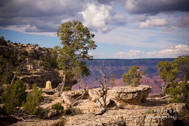 Woman sitting on fallen tree trunk. Grand Canyon NP, Arizona.