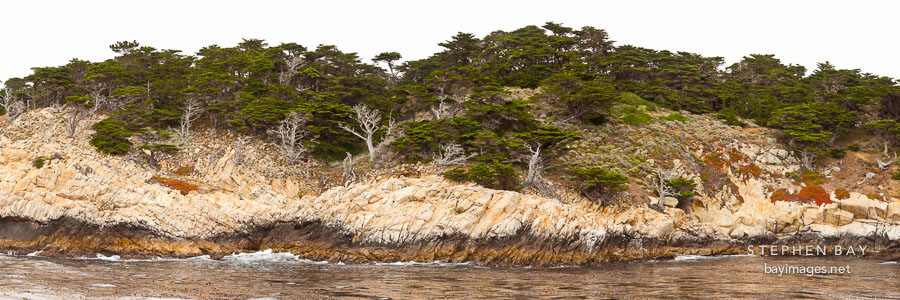 Panorama of the coastal bluffs at Point Lobos.