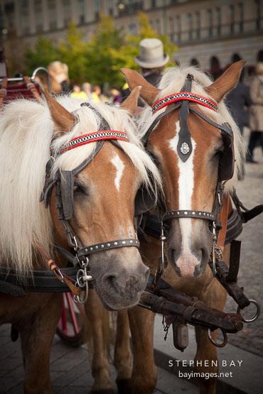 Two horses. Berlin, Germany.