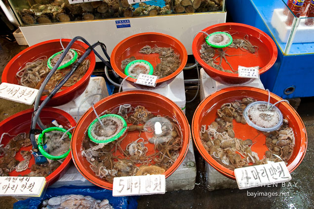 Live octopus (muneo) in buckets. Noryangjin Fish Market in Seoul.