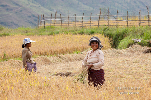 Women harvesting rice in Sopsokha, Bhutan.