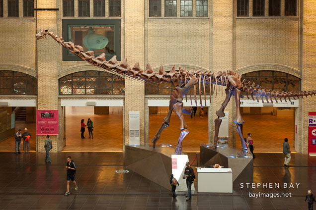 Museum Of Natural History Pictures