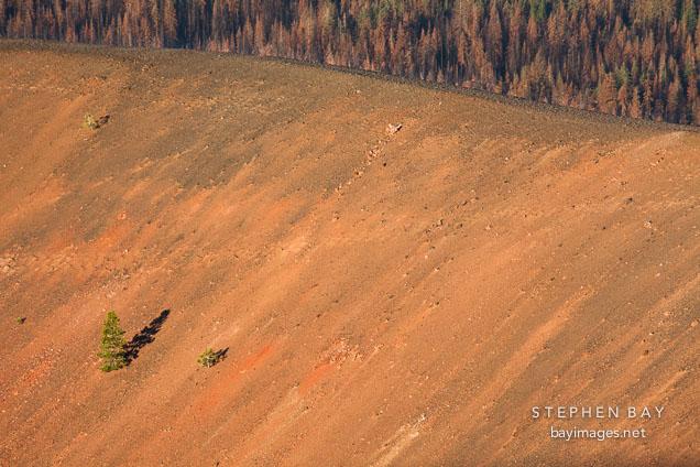 Pine trees on the rim of the Cinder Cone volcano. Lassen NP, California