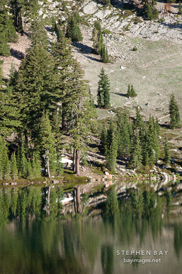 Trees on the shoreline of Emerald Lake. Lassen NP, California.