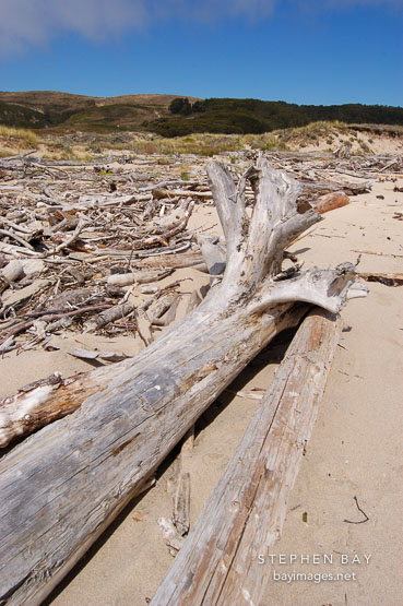 Driftwood at Pescadero state beach, California, USA.