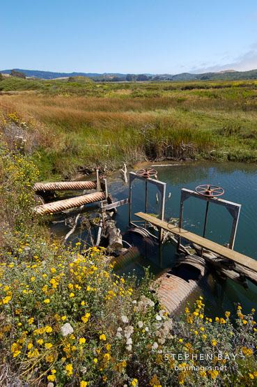 Pescadero marsh. California, USA.