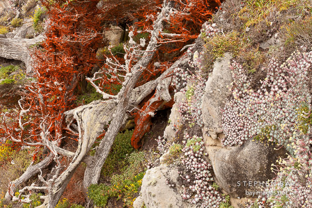 Succulents and cypress trees cover rocky cliff side.