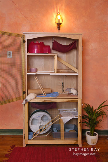 photo playrat mansion a rat cage made from a bookcase. Black Bedroom Furniture Sets. Home Design Ideas