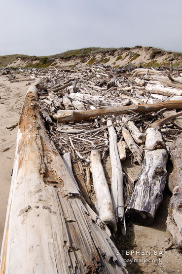 Driftwood at Pescadero state beach, California, USA.