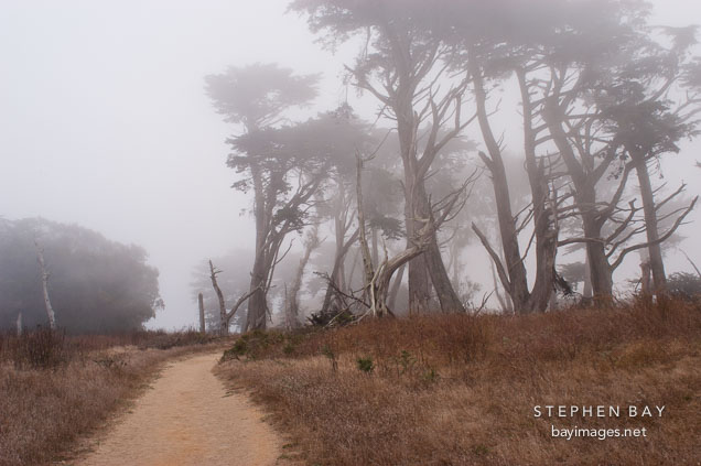 Dirt path and fog at Tomales Point, Point Reyes National Seashore, California.