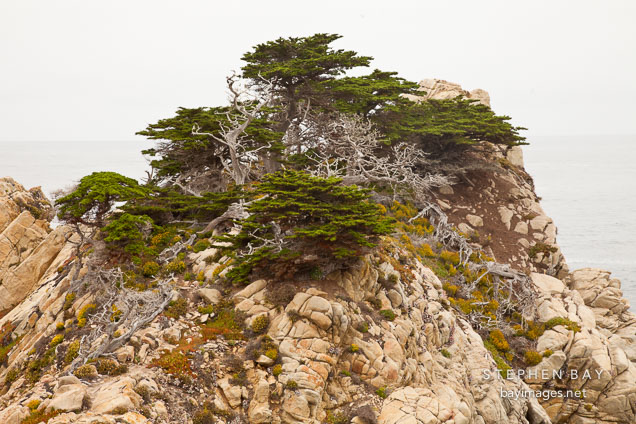 Cypress trees on rocky shoreline. Point Lobos, California.
