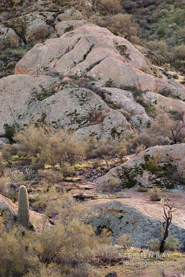 Desert cactus and chaparral on the Apache trail. Arizona, USA.