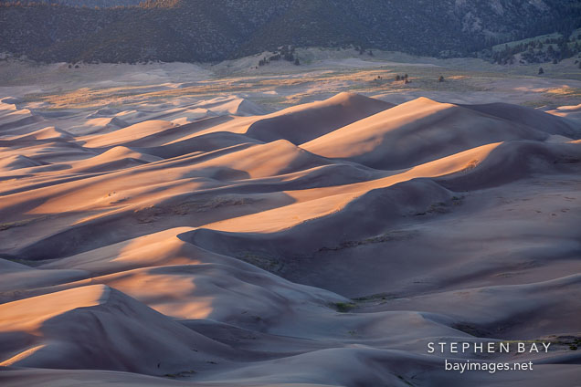 Dune field at sunset. Great Sand Dunes NP, Colorado.