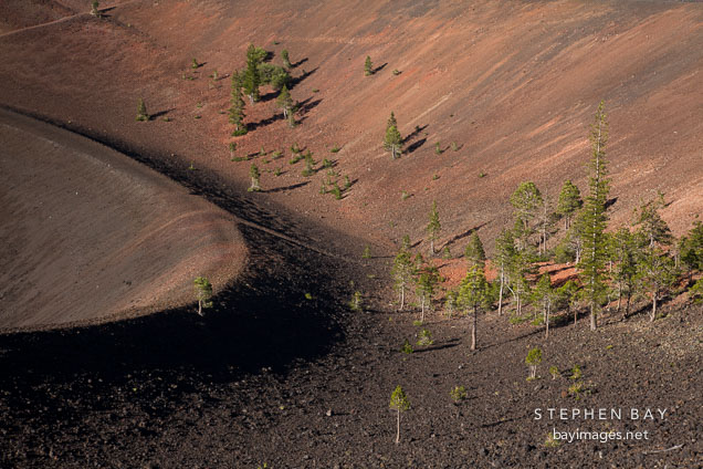 Pine trees and inner crater at Cinder Cone. Lassen NP, California.