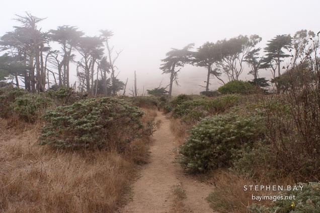Path at Tomales point. Point Reyes National Seashore, California.