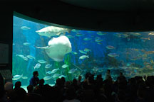 Melbourne aquarium. Melbourne, Australia. - Photo #1710