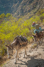 Donkeys. Inca trail, Peru. - Photo #9702