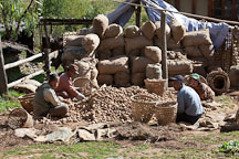 Farmers placing potatoes into bags for shipment. Phobjikha Valley, Bhutan. - Photo #23711