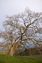 Arastradero Preserve. Palo Alto, California, USA. - Photo #2911
