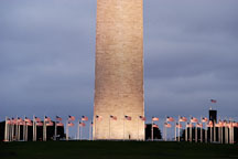 American flags surround the Washington Monument. Washington, D.C., USA. - Photo #10923