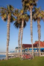 Palm trees and on Coronado. San Diego. - Photo #25914