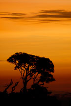 Silhouette of tree at sunset. Monteverde, Costa Rica. - Photo #14211