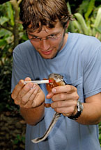 Nursing a baby variegated squirrel. Monteverde, Costa Rica. - Photo #14225