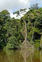 Pictures of Tortuguero National Park