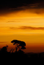Tree at sunset. Monteverde, Costa Rica. - Photo #14200