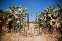 Gate overgrown with cacti. - Photo #26616