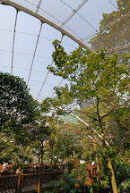 Edward Youde Aviary. Hong Kong, China. - Photo #16466