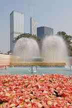 Poinsettia flower bed in front of fountains. Hong Kong Park, Hong Kong, China. - Photo #16439