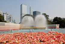 Poinsettia flower bed in front of fountains. Hong Kong Park, Hong Kong, China. - Photo #16440