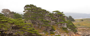 Allan Memorial Grove at Point Lobos, California. - Photo #26918