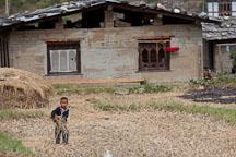Boy carrying cut rice stalks. Sopsokha, Bhutan. - Photo #23618