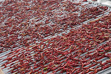 Chili peppers placed on a roof to dry. - Photo #23918