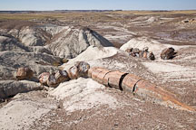 Freezing water causes the petrified logs to fracture. Long Logs Trail, Petrified Forest, Arizona. - Photo #17968
