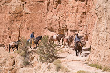 Leading a mule train out of the Grand Canyon. Grand Canyon NP, Arizona. - Photo #17430
