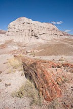 Petrified tree and badland hill. Petrified Forest, Arizona. - Photo #17950