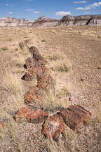 Petrified wood. Petrified Forest NP, Arizona. - Photo #17961