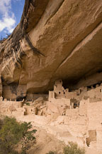 Cliff Palace is built into an alcove in the cliff face. Mesa Verde NP, Colorado. - Photo #18586