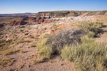 Grasses and scrub vegetation in the Painted Desert. Petrified Forest NP, Arizona. - Photo #18029
