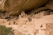 Cliff Palace is an extremely large settlement of Ancestral Puebloans. Mesa Verde NP, Colorado. - Photo #18587