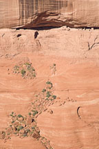 Ruins seen from Face Rock Overlook. Canyon de Chelly NM, Arizona. - Photo #18279