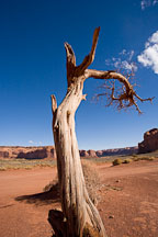 Tree remains. Monument Valley, Arizona. - Photo #18834