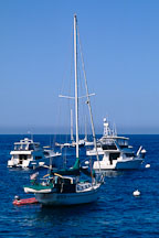 Boats. Avalon, Catalina Island, California. - Photo #565