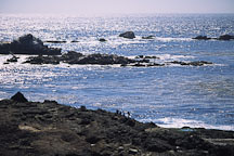 Point Lobos State Reserve. California, USA. - Photo #269