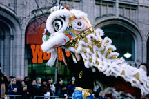 Lion Dancer. San Francisco Chinese New Year Parade, San Francisco, California - Photo #151
